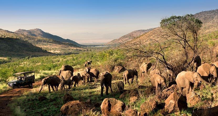 Kwa-Maritane-Elephant-Panoramic.jpg