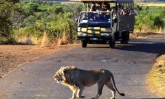 bakgatla-resort-game-drives.jpg